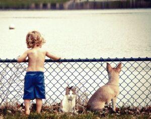 Niño con pantalones azules mirando a un lago con un gato y un perro